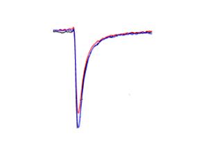 原代心肌细胞-钠通道